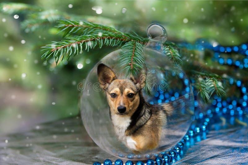 Σφαίρα Χριστουγέννων με το σκυλί κάτω από το δέντρο στοκ εικόνα με δικαίωμα ελεύθερης χρήσης