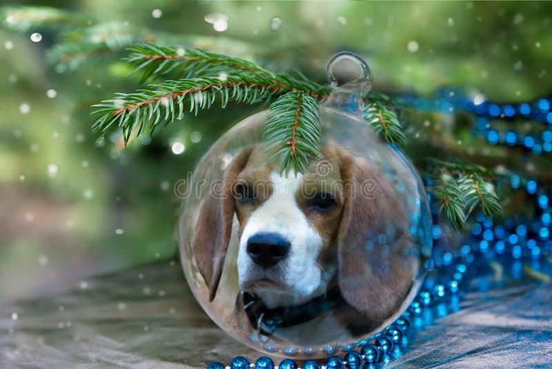Σφαίρα Χριστουγέννων με το σκυλί λαγωνικών κάτω από το χριστουγεννιάτικο δέντρο στοκ εικόνες