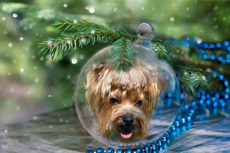 Σφαίρα Χριστουγέννων με το σκυλί της Υόρκης κάτω από το χριστουγεννιάτικο δέντρο στοκ φωτογραφία