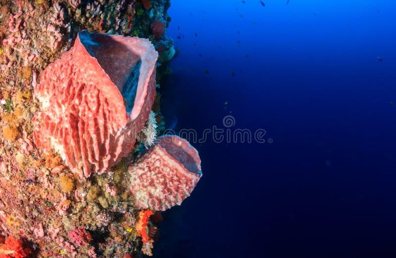 Σφουγγάρια και κοράλλια σε έναν τροπικό τοίχο κοραλλιογενών υφάλων στοκ εικόνες