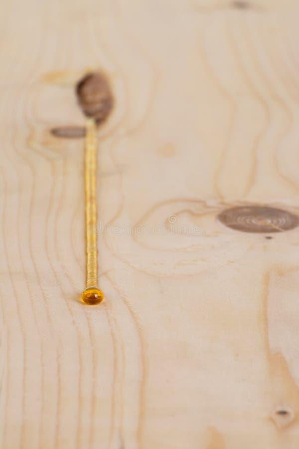 Download Σφρίγος που στάζει από την τσέπη πισσών Pinewood Στοκ Εικόνα - εικόνα από ηλέκτρινους, κλείστε: 62709821
