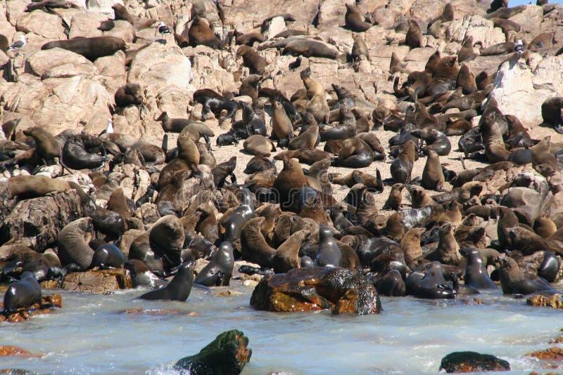 Download σφραγίδες στοκ εικόνες. εικόνα από σφραγίδες, ωκεανός, αφρική - 394000