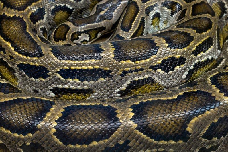 Σχέδια και δέρμα του python στοκ φωτογραφίες με δικαίωμα ελεύθερης χρήσης