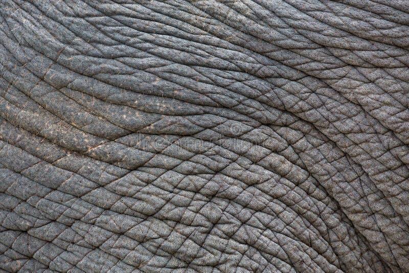 σχέδια και δέρμα των ελεφάντων στοκ φωτογραφίες με δικαίωμα ελεύθερης χρήσης