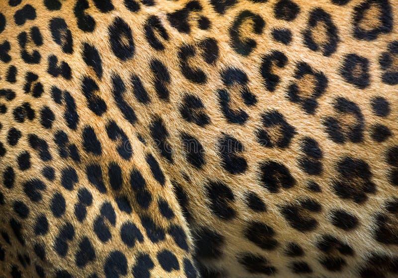 Σχέδια και συστάσεις της λεοπάρδαλης στοκ εικόνα