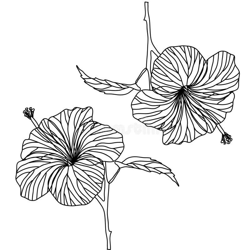 Σχέδιο περιγράμματος hibiscus του λουλουδιού Γραπτή απεικόνιση διανυσματική απεικόνιση