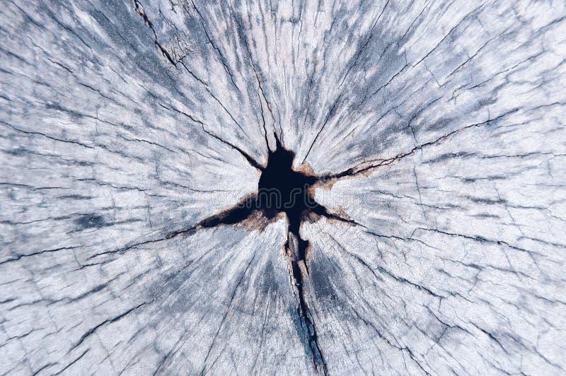 Σχέδιο του ξύλου κούτσουρων, ομορφιά που δημιουργείται από τη φύση στοκ εικόνες με δικαίωμα ελεύθερης χρήσης