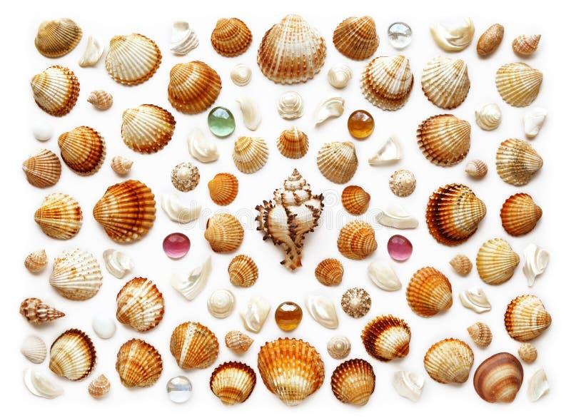 Σχέδιο των εξωτικών θαλασσινών κοχυλιών Απομονωμένος στο λευκό στοκ εικόνες