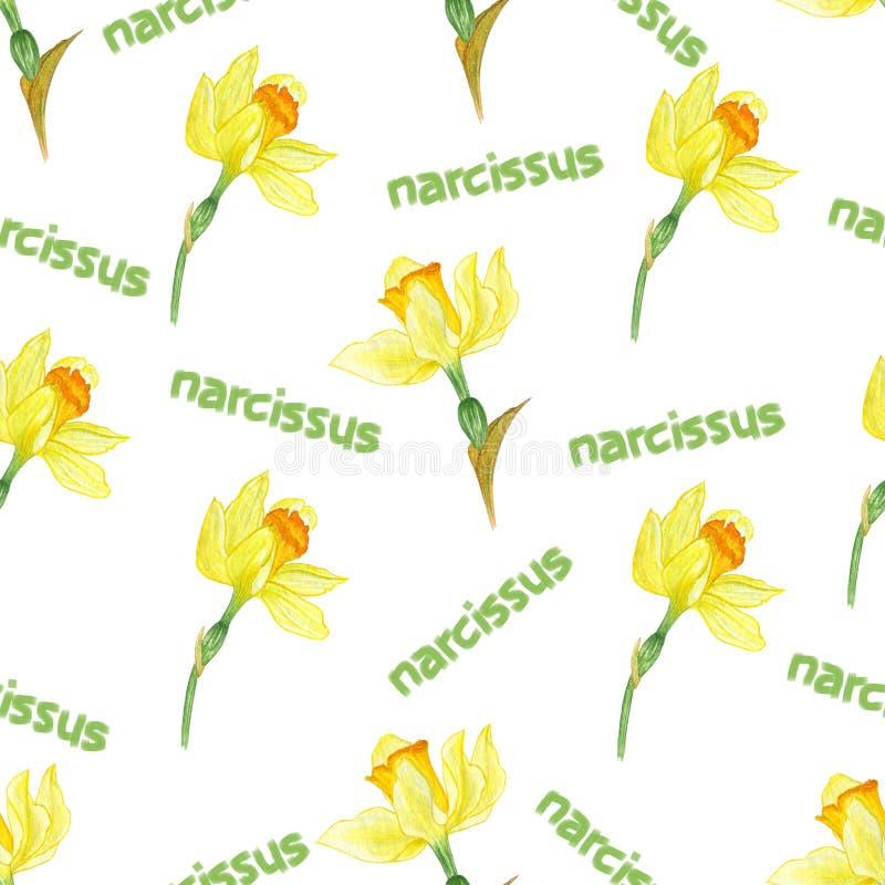 Σχέδιο φύσης λουλουδιών Watercolor Άσπρο backgraund διανυσματική απεικόνιση