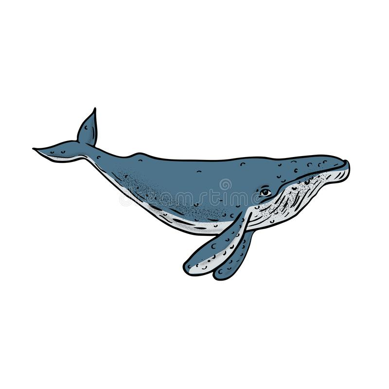 Σχέδιο χρώματος φαλαινών Humpback διανυσματική απεικόνιση