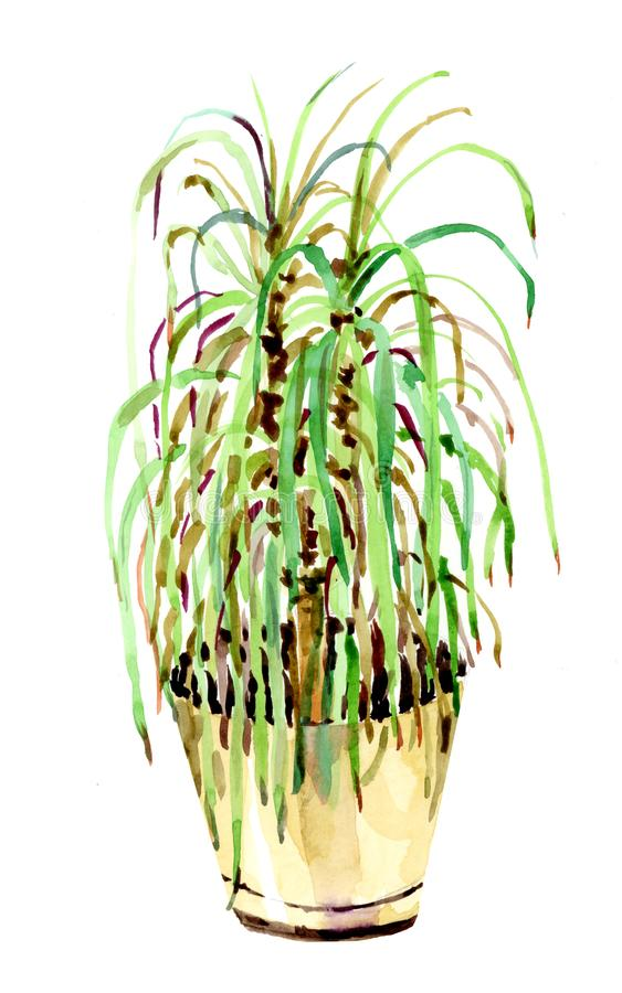 Σχέδιο Watercolor ενός διακοσμητικού λουλουδιού σε ένα δοχείο στοκ φωτογραφία με δικαίωμα ελεύθερης χρήσης