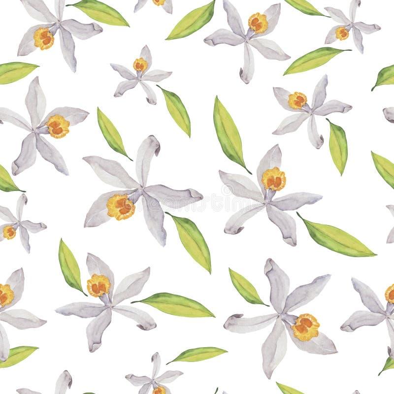 Σχέδιο watercolor λουλουδιών βανίλιας διανυσματική απεικόνιση
