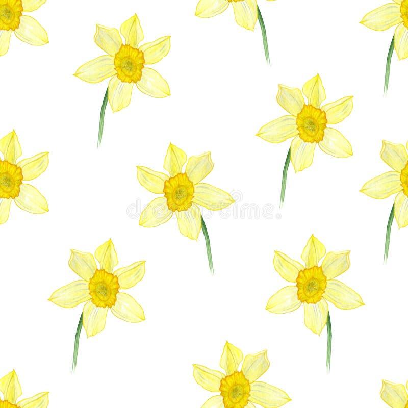 Σχέδιο Watercolor με το κίτρινο σχέδιο φύσης λουλουδιών ναρκίσσων διανυσματική απεικόνιση