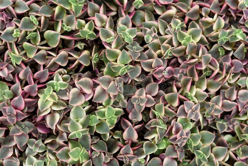 Σχέδια χλωρίδας στοκ φωτογραφία με δικαίωμα ελεύθερης χρήσης