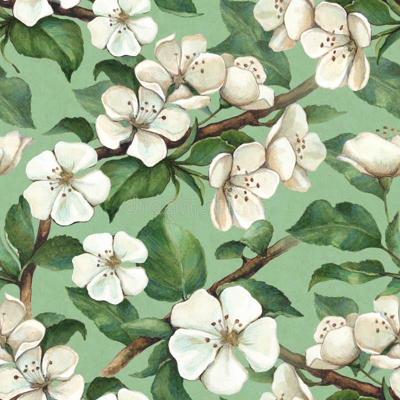 Σχέδιο με τα λουλούδια μήλων watercolor ελεύθερη απεικόνιση δικαιώματος