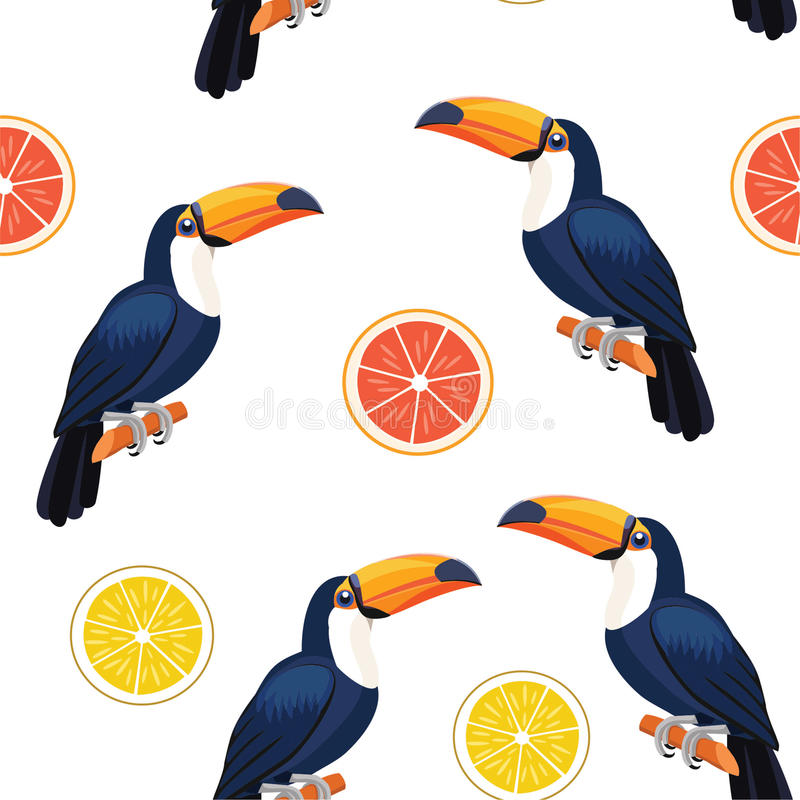Σχέδιο με toucan και τα εσπεριδοειδή άνευ ραφής διάνυσμα σύστασ διανυσματική απεικόνιση
