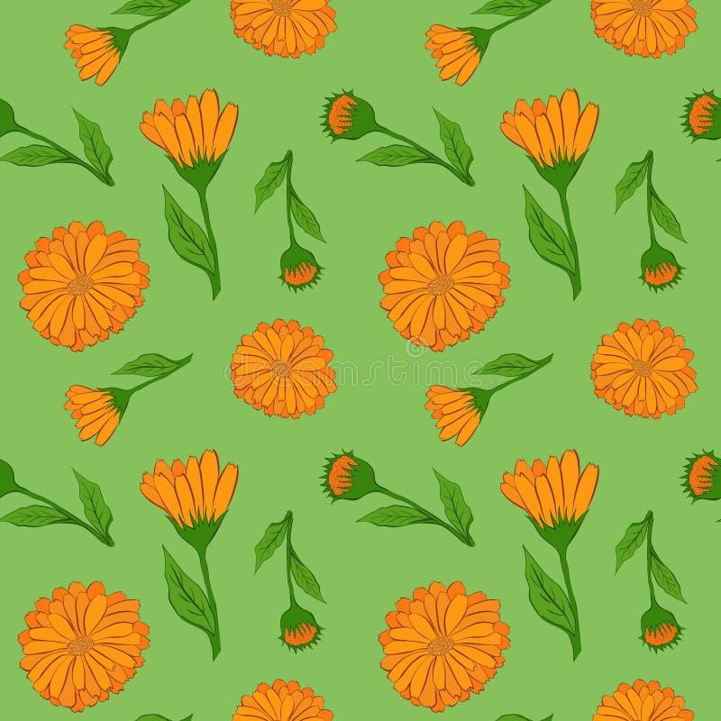 Σχέδιο λουλουδιών Calendula ελεύθερη απεικόνιση δικαιώματος