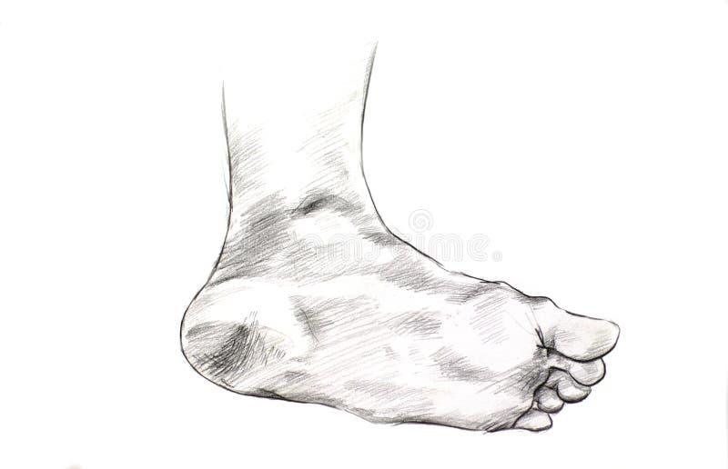 Σχέδιο ποδιών ελεύθερη απεικόνιση δικαιώματος