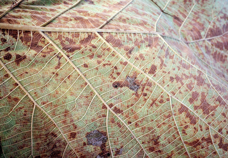 Σχέδιο τέχνης γραμμών στο ξηρό φύλλο στοκ φωτογραφίες με δικαίωμα ελεύθερης χρήσης
