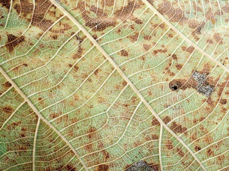 Σχέδιο τέχνης γραμμών στο ξηρό φύλλο στοκ εικόνες με δικαίωμα ελεύθερης χρήσης