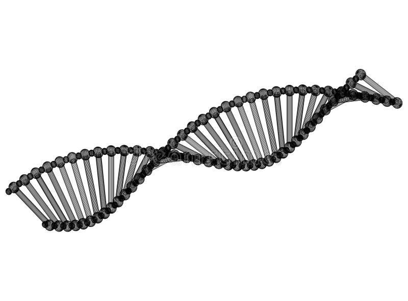 Σχεδιάγραμμα αρχιτεκτόνων DNA ελεύθερη απεικόνιση δικαιώματος