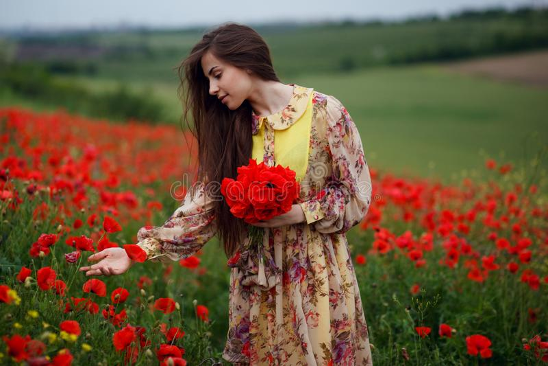 Σχεδιάγραμμα μιας όμορφης νέας γυναίκας, μακρυμάλλης, που στέκεται στον κόκκινο τομέα λουλουδιών παπαρουνών, όμορφο υπόβαθρο τοπί στοκ εικόνα με δικαίωμα ελεύθερης χρήσης