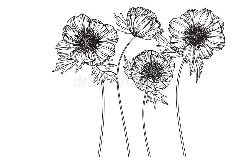 Σχεδιασμός και σκίτσο λουλουδιών Anemone με την γραμμή-τέχνη απεικόνιση αποθεμάτων