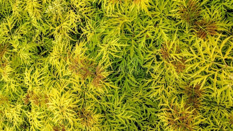 Σχηματισμένος τούφες με τα ανοικτό πράσινο φύλλα στοκ εικόνα