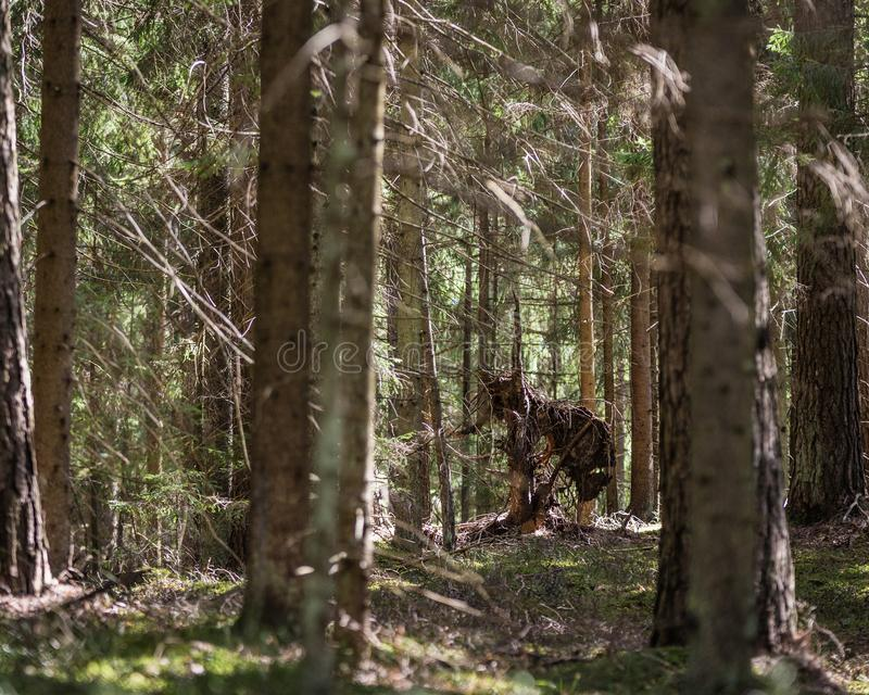 σχηματισμός φύσης στο κομψό δάσος στοκ φωτογραφίες με δικαίωμα ελεύθερης χρήσης