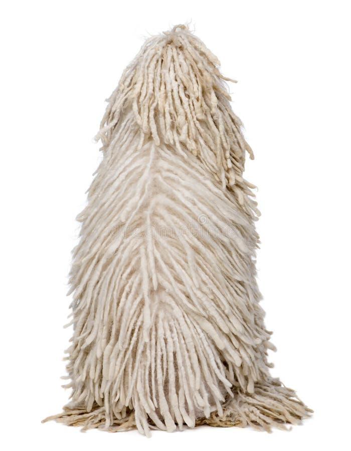 σχοινόδετο poodle οπίσθιο λ&epsilon στοκ φωτογραφίες