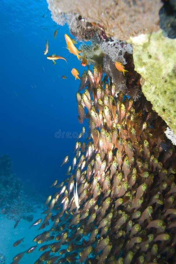 σχολείο γυαλιού ψαριών στοκ εικόνα με δικαίωμα ελεύθερης χρήσης