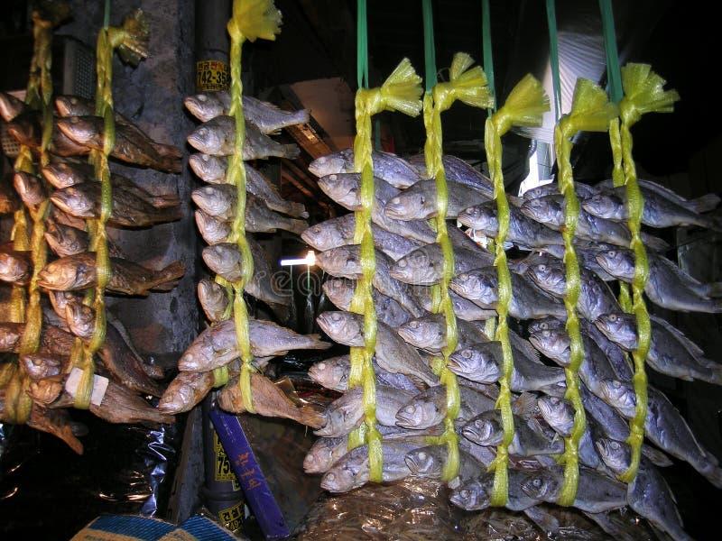 σχολείο ψαριών στοκ εικόνες