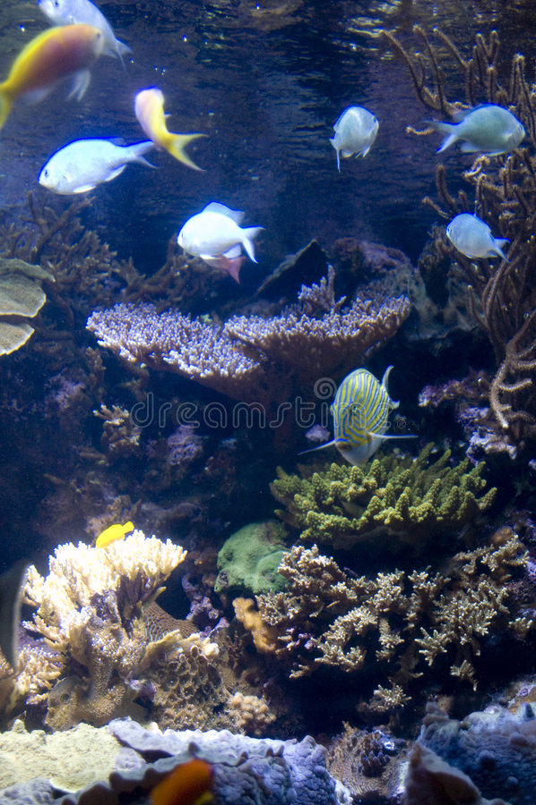 σχολείο ψαριών στοκ φωτογραφίες με δικαίωμα ελεύθερης χρήσης