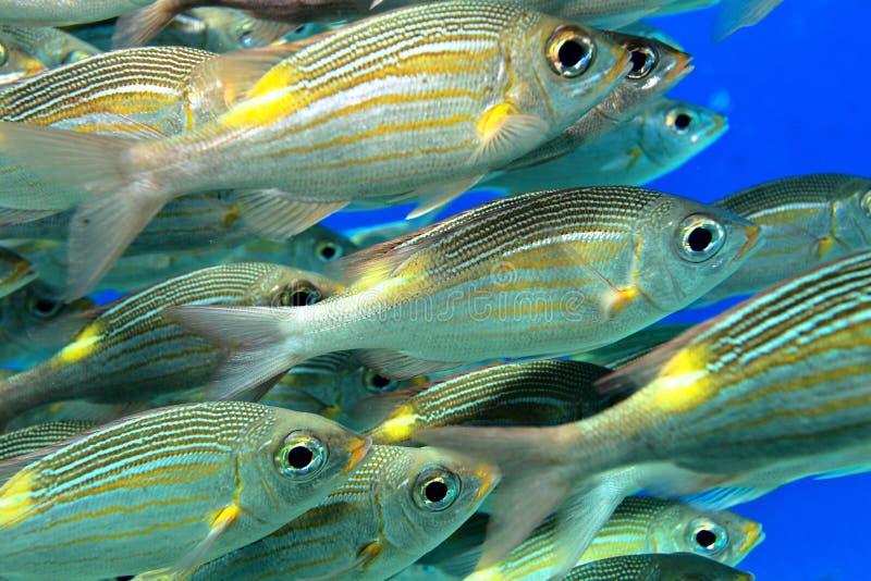 Σχολείο των ψαριών στοκ φωτογραφία με δικαίωμα ελεύθερης χρήσης