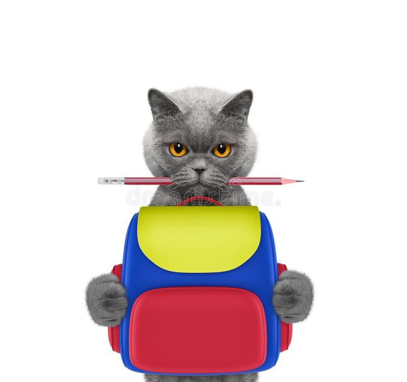 Σχολείο υπακοής - γάτα με την τσάντα που απομονώνεται στο λευκό στοκ φωτογραφίες