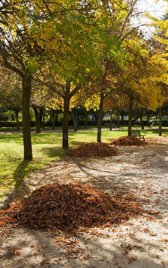 Σωροί των φύλλων που συλλέγονται στο φθινοπωρινό πάρκο στοκ φωτογραφίες