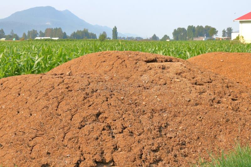 Σωρός λιπάσματος για Cornfield στοκ φωτογραφία με δικαίωμα ελεύθερης χρήσης