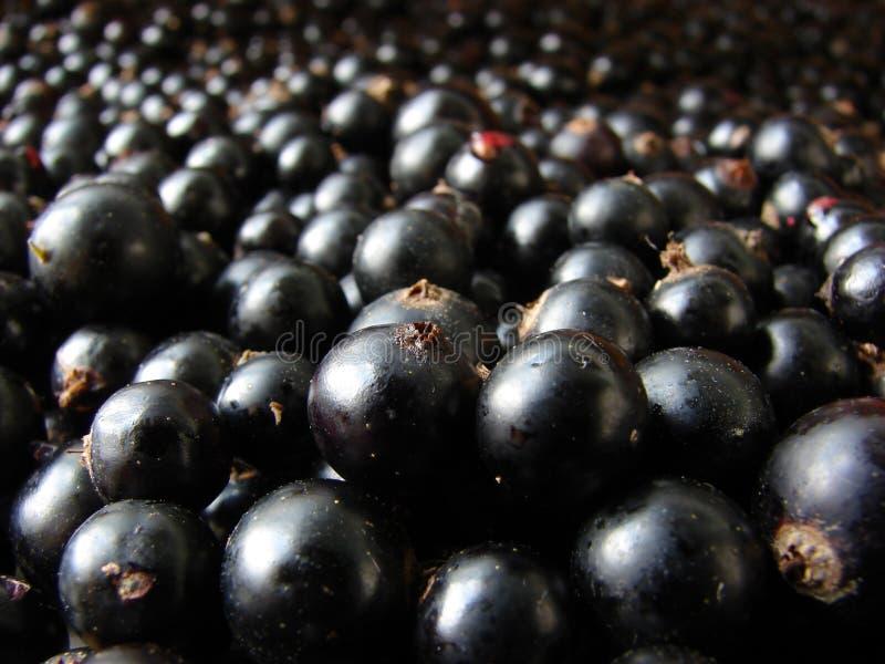 σωρός μαύρων σταφίδων στοκ εικόνα με δικαίωμα ελεύθερης χρήσης