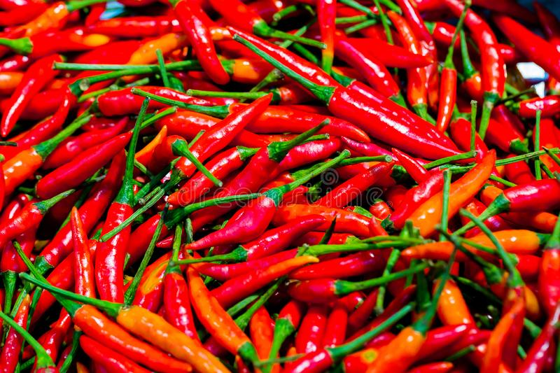 Σωρός της φρέσκιας κόκκινης σύστασης πιπεριών τσίλι τρόφιμα ανασκόπησης ακατέρ& κλείστε επάνω στοκ φωτογραφία με δικαίωμα ελεύθερης χρήσης