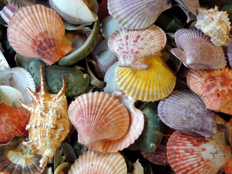 Σωρός της Shell θάλασσας στοκ φωτογραφία με δικαίωμα ελεύθερης χρήσης