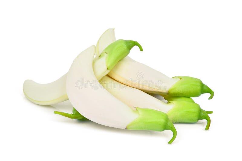 Σωρός του άσπρου sesban απομονωμένου λαχανικό λευκού ο στοκ φωτογραφίες