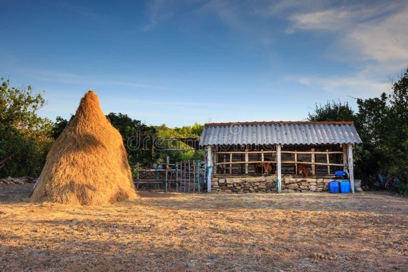 Σωρός του αχύρου, επιφύλαξη τροφίμων για τα βοοειδή μετά από τη συγκομιδή στοκ εικόνες με δικαίωμα ελεύθερης χρήσης