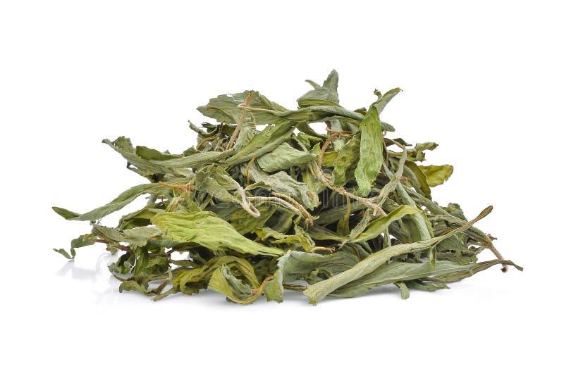 Σωρός του ξηρού bertoni rebaudiana stevia που απομονώνεται στο λευκό στοκ φωτογραφίες