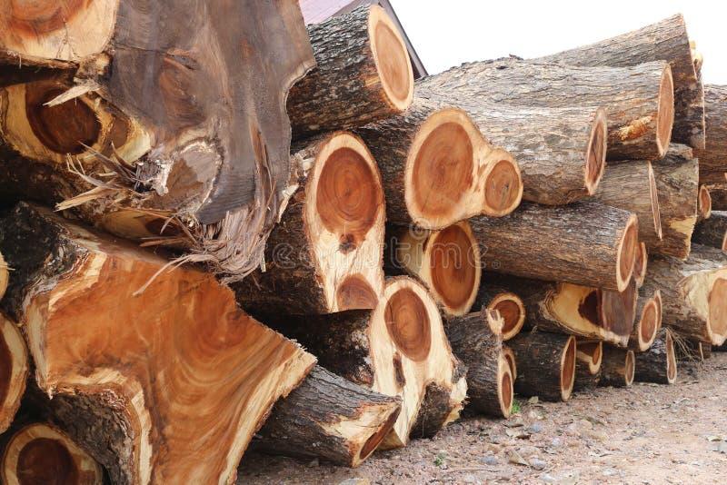 Σωρός του ξύλου δέντρων βροχής στην περικοπή στο κομμάτι στοκ φωτογραφία με δικαίωμα ελεύθερης χρήσης