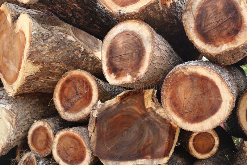 Σωρός του ξύλου δέντρων βροχής στην περικοπή στο κομμάτι στοκ εικόνα