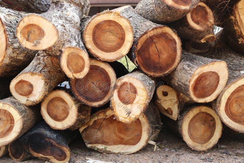 Σωρός του ξύλου δέντρων βροχής στην περικοπή στο κομμάτι στοκ εικόνες