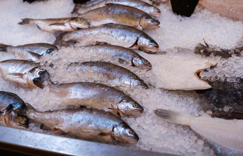 Σωρός των ασημένιων ψαριών στον πάγο Αγορά ψαριών Φρέσκα ακατέργαστα ψάρια σκουμπριών στο υπόβαθρο πάγου Ασημένια ψάρια στον πάγο στοκ φωτογραφία