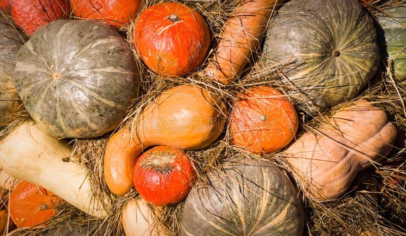 Σωρός των διάφορων κολοκυθών στο φεστιβάλ συγκομιδών ημέρας των ευχαριστιών υπόβαθρο, λαχανικά στοκ εικόνες