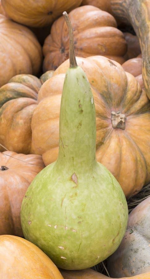 Σωρός των διάφορων κολοκυθών στο φεστιβάλ συγκομιδών υπόβαθρο, λαχανικά στοκ εικόνα με δικαίωμα ελεύθερης χρήσης