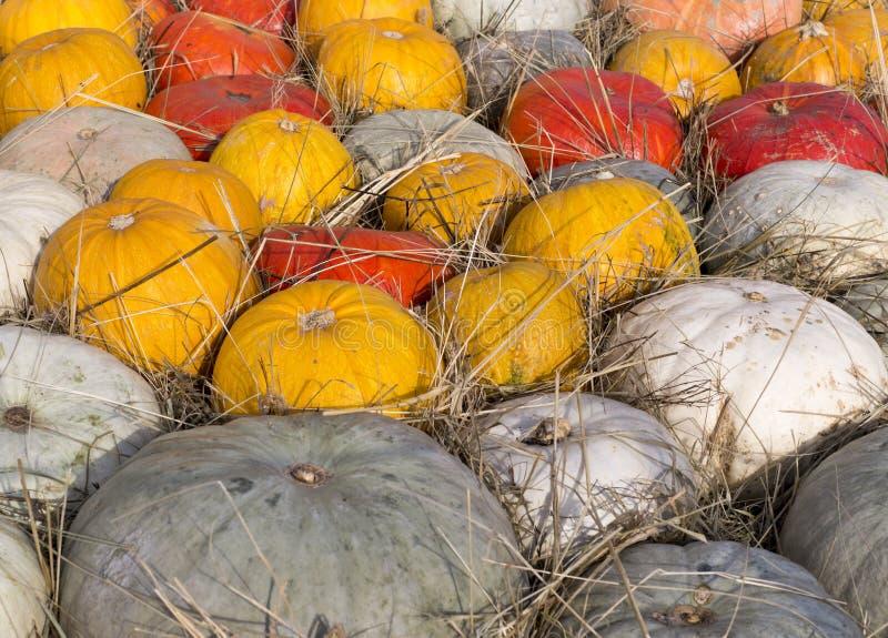 Σωρός των διάφορων κολοκυθών στο φεστιβάλ συγκομιδών υπόβαθρο, λαχανικά στοκ εικόνες